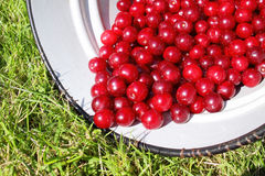 Fresh cherries Stock Photo