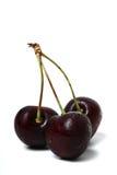 Fresh Cherries. Three fresh black cherries isolated on white stock image