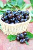 Fresh cherries in a basket Stock Photos