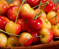 Fresh Cherries in Basket Stock Photography