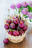 Fresh cherries in a basket Royalty Free Stock Images