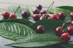 Fresh cherries closeup with green leaves on blue rustic wood. Backround. Healthy food on table Royalty Free Stock Photography