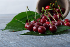 Fresh cherries closeup with green leaves on blue rustic wood Stock Photos