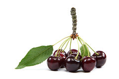 Fresh cherries with green leaf. Stock Photos