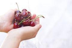 Fresh cherries in the hands Stock Photo