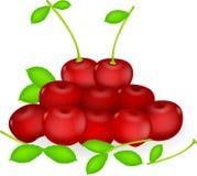 Fresh cherries. Illustration of fresh cherries isolated on white Stock Photos