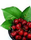 Fresh Cherries With Leaves. Just picked cherries displayed in a black bowl with cherry leaves Stock Image