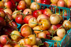 Fresh cherries Royalty Free Stock Photography