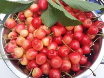 Fresh cherries. Fresh red cherries on a white table royalty free stock images