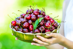 Fresh cherries in retro bowl. Young girl holding in her hand a bowl of freshly picked sweet juicy cherries Stock Photos