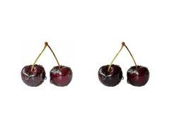 Fresh cherries with water drops isolated on white. Two pairs of fresh cherries medium and dark colored with water drops isolated on white Royalty Free Stock Photos