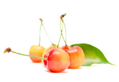 Fresh cherries on white background. Fresh cherries with leaves and twigs isolated on white background royalty free stock photo