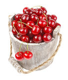 Fresh cherries in a wood bucket. Fresh cherries with water drops in a wood bucket Royalty Free Stock Image