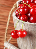 Fresh cherries in a wood bucket. Fresh cherries with water drops in a wood bucket Royalty Free Stock Photos
