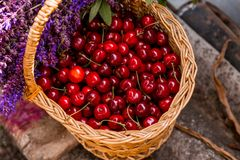 Fresh cherries in a wooden bascket. royalty free stock image