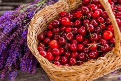 Fresh cherries in a wooden bascket. stock photo