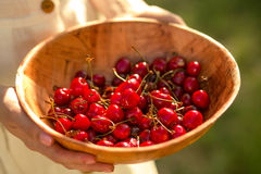 Fresh cherries in wooden bowl in woman hands. New harvest of ripe cherries Royalty Free Stock Image