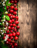 Fresh cherry and brunch blossoms. Stock Photo