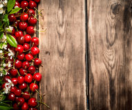 Fresh cherry and brunch blossoms. On wooden background Royalty Free Stock Images