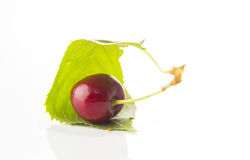 Fresh Cherry Closeup on Bright Background Stock Image