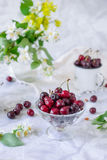 Fresh cherry fruit in glass vase, other dishes with berries and jar with jasmine and wildflowers on the light marble table. Soft s. Elective focus. Summer stock images