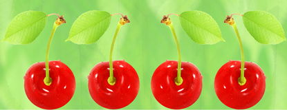 Fresh cherry fruit with leaves in bluer leaves background. Food health related Blog art banner web design concept background royalty free stock photos