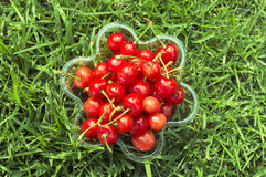 Fresh cherry on the grass Stock Images