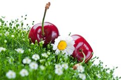 Fresh cherry on a green grass Royalty Free Stock Photo