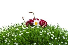 Fresh cherry on a green grass Stock Image