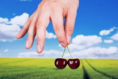Fresh cherry. A human hand holding two cherries on the natural background Royalty Free Stock Image