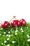 Fresh cherry isolated on a white background Stock Photos