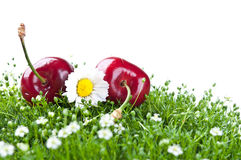 Fresh cherry isolated on a white background Royalty Free Stock Photography