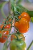 Fresh Cherry Stock Photography