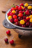 Fresh cherry plums Stock Photography