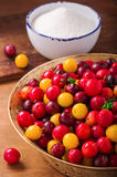 Fresh cherry plums Stock Image