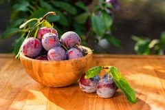Fresh cherry plums in wooden bowl close. Close up freshly picked cherry plums in wooden bowl. Selective focus. Healthy vegetarian summer diet royalty free stock photography