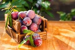Fresh cherry plums in wooden box close. Close up freshly picked cherry plums in wooden box. Selective focus. Healthy vegetarian summer diet stock photos