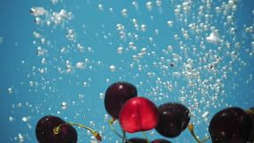 A fresh cherry are splashing into water on blue background. Many cherry are falling into water against blue background. A fresh cherry are splashing into water vector illustration