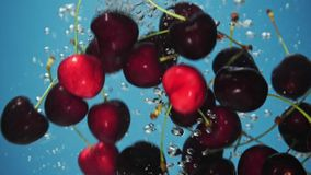 A fresh cherry are splashing into water on blue background. Many cherry are falling into water against blue background. A fresh cherry are splashing into water stock footage