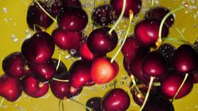 A fresh cherry are splashing into water on yellow background. Many cherry are falling into water against yellow background. A fresh cherry are splashing into stock footage
