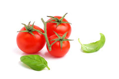 Fresh cherry tomato with basil leaves isolated. Stock Images