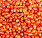 Fresh cherry tomato Stock Image