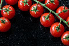 Fresh cherry tomatoes on a black background. Royalty Free Stock Images
