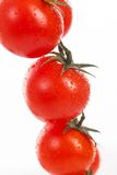 Fresh cherry tomatoes on a branch Royalty Free Stock Photography