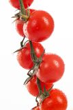 Fresh cherry tomatoes on a branch Royalty Free Stock Photos