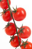 Fresh cherry tomatoes on a branch Stock Photos