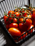 Fresh cherry tomatoes on branch in iron basket Royalty Free Stock Images