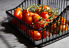 Fresh cherry tomatoes on branch in iron basket Royalty Free Stock Photos
