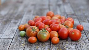 Fresh cherry tomatoes from farm Stock Image