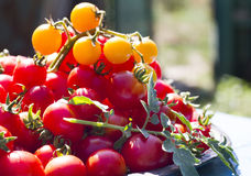 Fresh cherry tomatoes. On plate Royalty Free Stock Photo